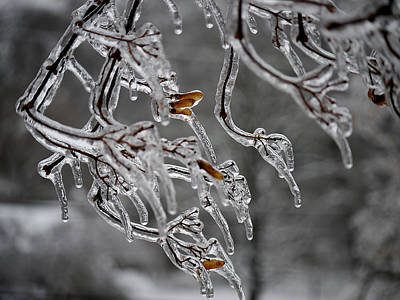Photograph - Winter - Icy Branches by Richard Reeve