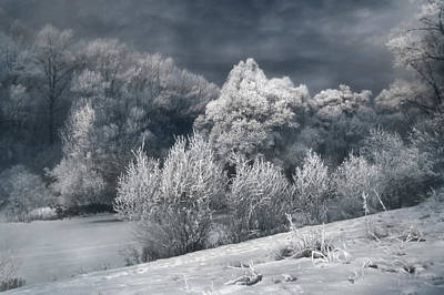 Photograph - Winter - IIi by Akos Kozari