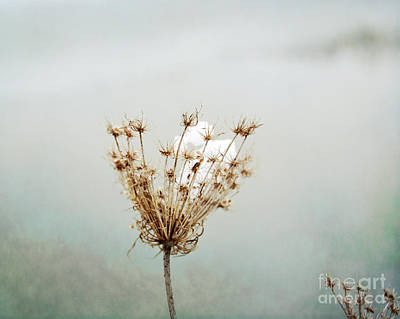 Photograph - Winter Impressions Ic by Katerina Vodrazkova