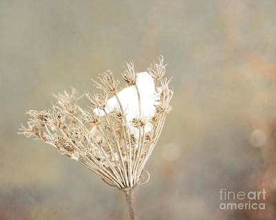 Photograph - Winter Impressions IIi by Katerina Vodrazkova