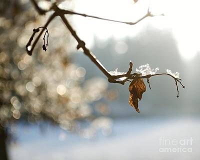 Photograph - Winter Impressions V by Katerina Vodrazkova