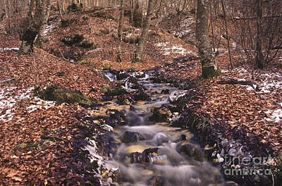 Stream Photograph - Winter In Abruzzo National Park by George Atsametakis