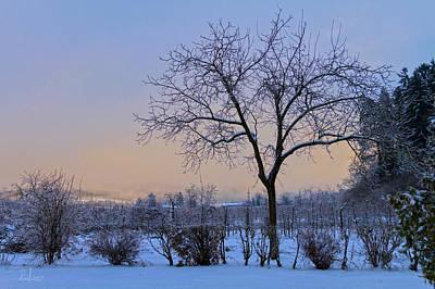 Photograph - Winter In Color by Raffaella Lunelli