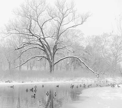 Photograph - Winter In Forest Park by Scott Rackers