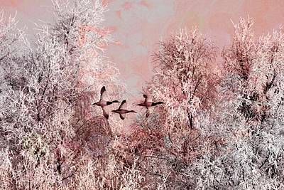 Photograph - Winter In Pink by Paula Ayers