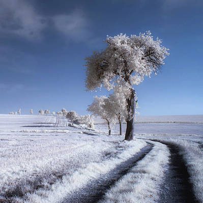 Infrared Photograph - Winter In Summer by Piotr Krol (bax)