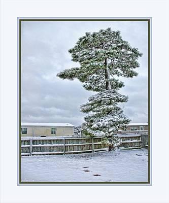 Winter In The Backyard Art Print