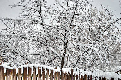 Photograph - Winter In The Heartland 1 by Deborah Smolinske