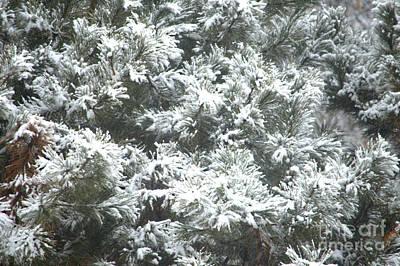 Photograph - Winter In The Heartland 2 by Deborah Smolinske