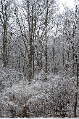 Photograph - Winter In The Heartland 5 by Deborah Smolinske