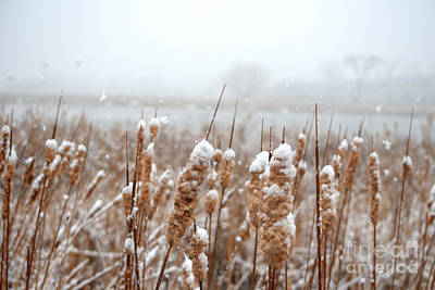 Photograph - Winter In The Heartland 6 by Deborah Smolinske