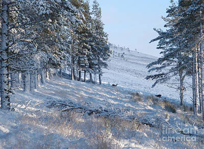 Photograph - Winter In The Hills by Phil Banks