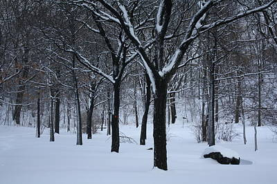 Art Print featuring the photograph Winter In The Park by Dora Sofia Caputo Photographic Art and Design