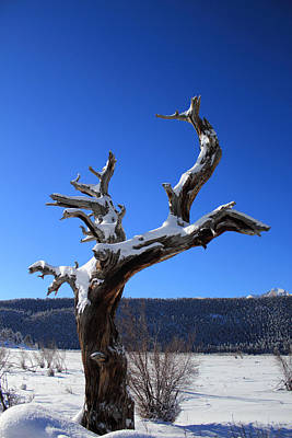 Photograph - Winter In The Rockies by Shane Bechler