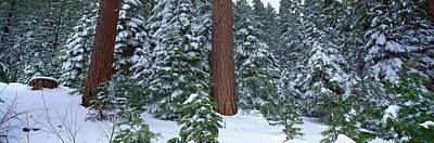 Winter In The Sierra Mountains Art Print by Panoramic Images