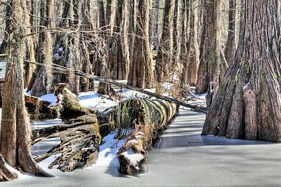 Swamp Thing Photograph - Winter In The Swamp by JC Findley