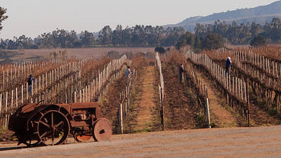 Photograph - Winter In The Vineyards by Derek Dean