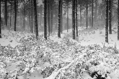 Photograph - Winter In The Woods  by Saija  Lehtonen