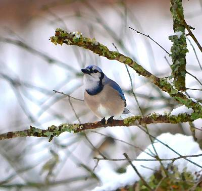 Bluejay Photograph - Winter Jay by Deena Stoddard