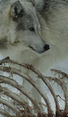 Photograph - Winter Kill by Steve McKinzie