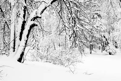 Winter Lace II Print by Jenny Rainbow