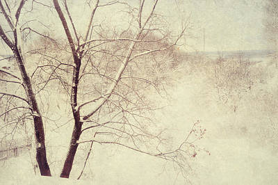 Photograph - Winter Lace by Jenny Rainbow