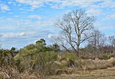 Photograph - Winter Landscape Biloxi Ms by Cathy Jourdan