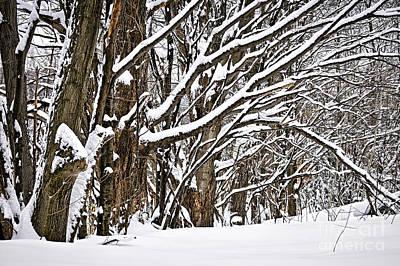 Winter Landscapes Photograph - Winter Landscape by Elena Elisseeva
