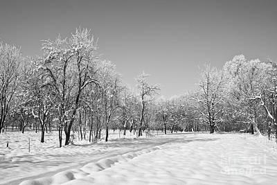 Wild Horse Paintings - Winter Landscape In Bw by Dan Radi
