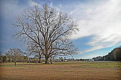 Photograph - Winter Landscape by Linda Brown