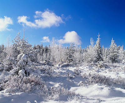 Cold Temperature Photograph - Winter Landscape, Nature Reserve by Panoramic Images