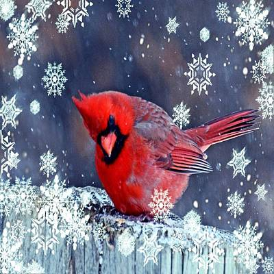 Outdoor Still Life Mixed Media - Winter Landscape Snowflakes Red Cardinal by Cranberry Sky