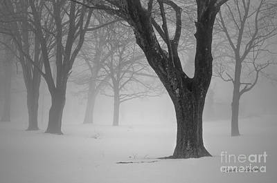 Photograph - Winter Landscape V by Dave Gordon