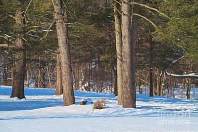 Photograph - Winter Landscape by William Norton