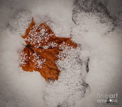 Photograph - Winter Leaf by Grace Grogan