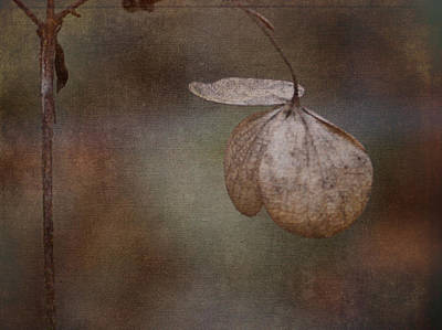 Photograph - Winter Leaf by Ron Roberts
