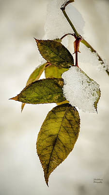 Photograph - Winter Leaves And Snow by Julie Palencia