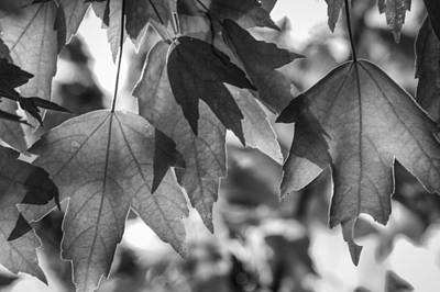 Photograph - Winter Leaves - Bw by Carolyn Marshall