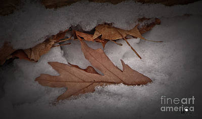 Photograph - Winter Leaves On Log by Grace Grogan
