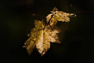 Photograph - Winter Leaves by Ron Roberts