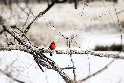 Wall Art - Photograph - Winter Life by Daniel Kleefeld