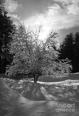 Photograph - Winter Light by Barbara Bardzik