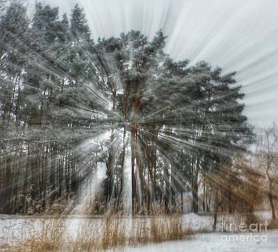 Photograph - Winter Light In A Forest by Iryna Liveoak
