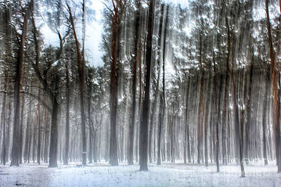 Winter Light In A Forest With Dancing Trees Art Print