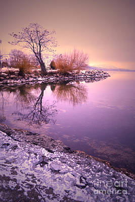 Photograph - Winter Light Reflected by Tara Turner