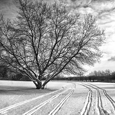 Winter Lines Print by Lauri Novak