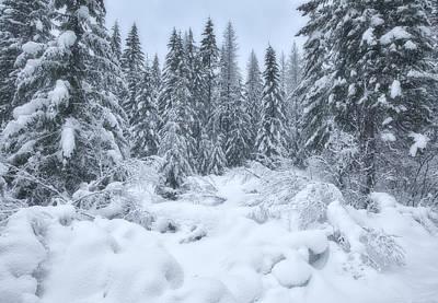 Winter Scenes Photograph - Winter Magic by Darren  White