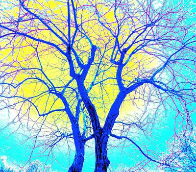 Winter Marriage Of Two Trees Art Print by Ann Johndro-Collins