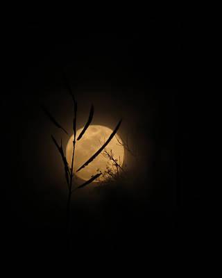 Photograph - Winter Marsh Moon by Deborah Smith