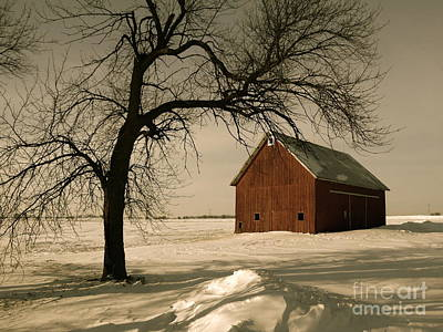 Photograph - Winter Memory by Tim Good